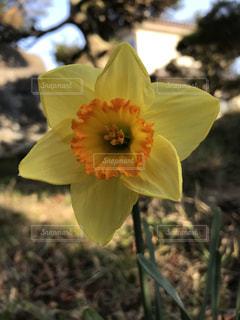 花のクローズアップの写真・画像素材[3047115]