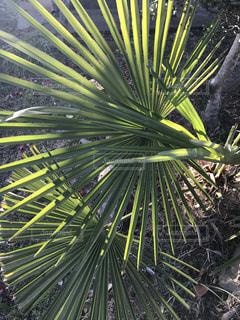 植物の写真・画像素材[3047119]