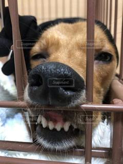 犬の写真・画像素材[3377604]