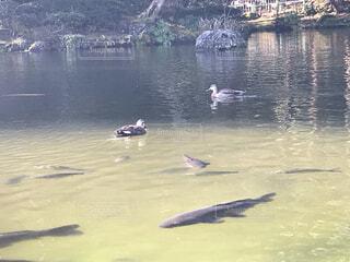 水に浮かんでいる人々のグループの写真・画像素材[4159467]