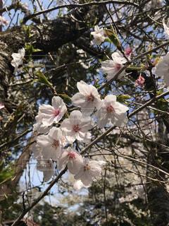 木の枝に花瓶の写真・画像素材[4284059]
