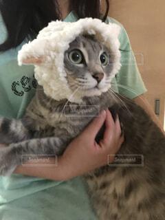 襟付きのシャツを着た猫の写真・画像素材[4378477]