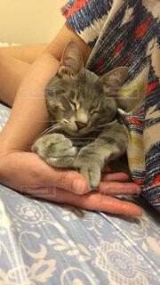 ベッドに横たわる猫の写真・画像素材[4520086]