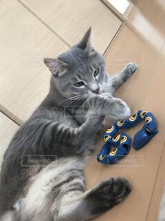 ぬいぐるみの上に横たわっている猫の写真・画像素材[4542770]