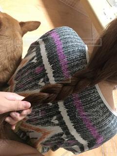犬を抱いている人の写真・画像素材[4834643]