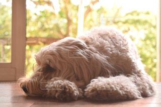 窓の前で遊び待ち犬のクローズアップの写真・画像素材[2805042]