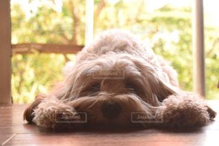 遊んでほしくておねだり中の犬の写真・画像素材[2805049]