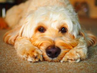 遊んでほしい犬の写真・画像素材[2805068]