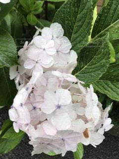 花のクローズアップの写真・画像素材[2272620]