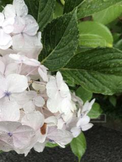 花のクローズアップの写真・画像素材[2272621]