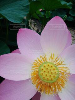 花のクローズアップの写真・画像素材[2285912]