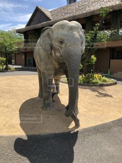 建物の前に立っている大きな象の写真・画像素材[2261421]