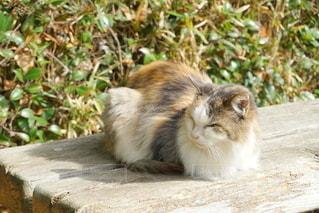 公園ののら猫の写真・画像素材[2259420]