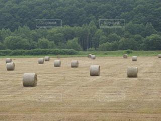 牧草ロールの写真・画像素材[2261911]