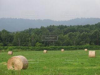 牧草ロールの写真・画像素材[2261912]