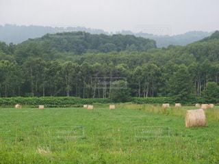 牧草ロールの写真・画像素材[2261913]