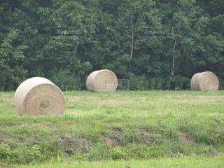 牧草ロールの写真・画像素材[2261916]