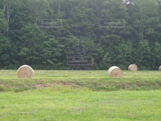 牧草ロールの写真・画像素材[2261915]