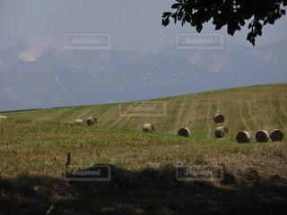 牧草ロールの写真・画像素材[2265848]