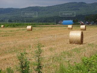 牧草ロールの写真・画像素材[2266260]