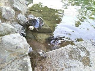 栗林公園の写真・画像素材[2288113]