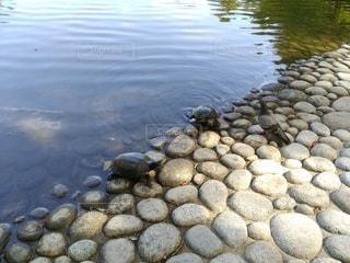 亀と鳩の写真・画像素材[2342489]