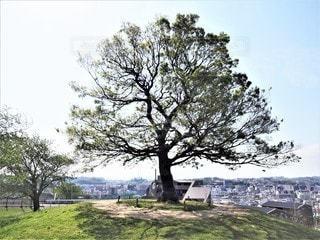ゆずの木の写真・画像素材[3151321]