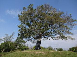 ゆずの木の写真・画像素材[3151322]