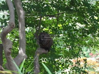 木の上に座っているリスの写真・画像素材[3393376]