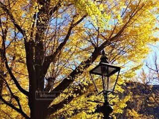 街灯と街路樹の写真・画像素材[3929984]