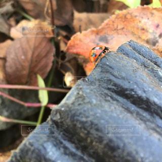 テントウムシの坂登りの写真・画像素材[864945]