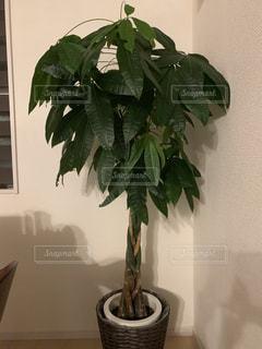 植物の写真・画像素材[2286624]