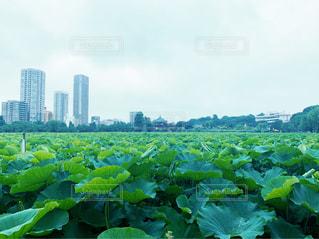 上野公園 不忍池の写真・画像素材[2262456]