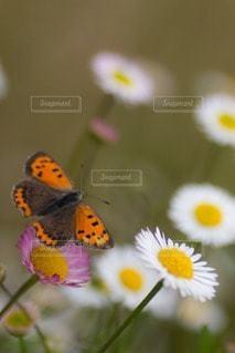 花の写真・画像素材[102994]