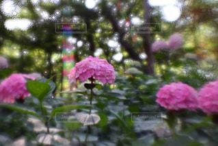 植物にピンクの花の写真・画像素材[726899]