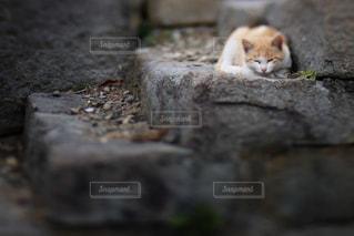 石の表面の上に座って猫の写真・画像素材[736054]
