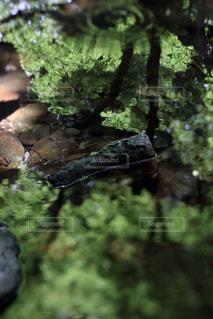 近くの岩のアップの写真・画像素材[736058]