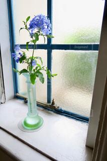 紫陽花の写真・画像素材[2263341]