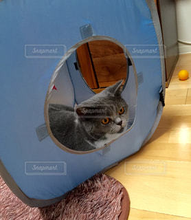 猫の写真・画像素材[126759]