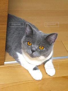 猫の写真・画像素材[126760]