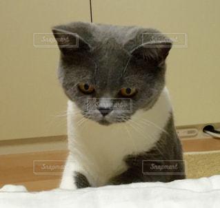 猫の写真・画像素材[126763]