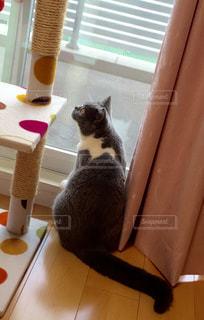 猫の写真・画像素材[126767]