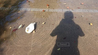 かわいいアヒルとの夏休みの思い出の写真・画像素材[3648627]