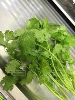 野菜 - No.105837