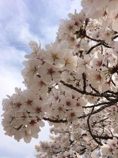 春 - No.107421