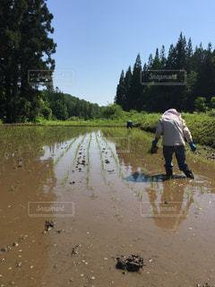 田植えの風景の写真・画像素材[2267237]