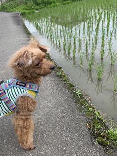 美味しいお米ができますようにの写真・画像素材[2272007]