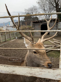 鹿の写真・画像素材[2828932]