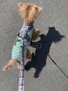 暑くても散歩は不可欠の写真・画像素材[3483864]