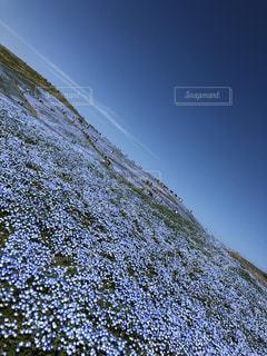 花も空も青いの。の写真・画像素材[2285145]